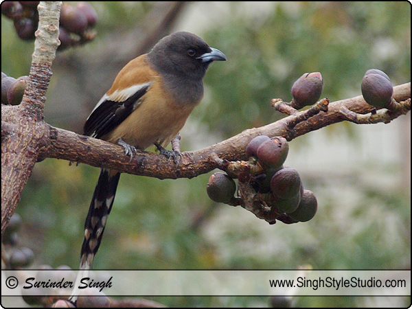 Birds Nature Photography Photographer India Delhi