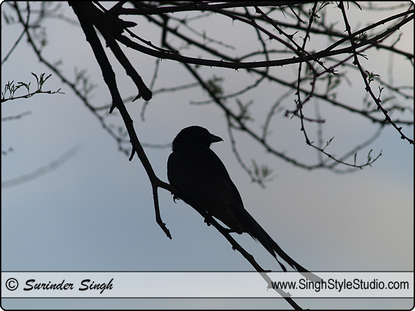 Birds Photography, India