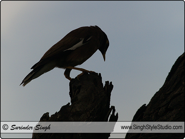 Birds Photographer in India Delhi