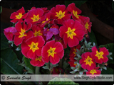 Flowers Photography in India