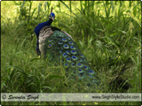 Birds Photographer India Delhi Indian Nature & Wild Life Photographer in Delhi India