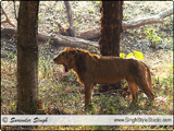 Wildlife Photographer in India Delhi Indian Nature & Wild Life Photographer in Delhi India