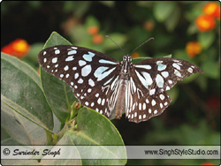 Butterflies Nature Photography Delhi India