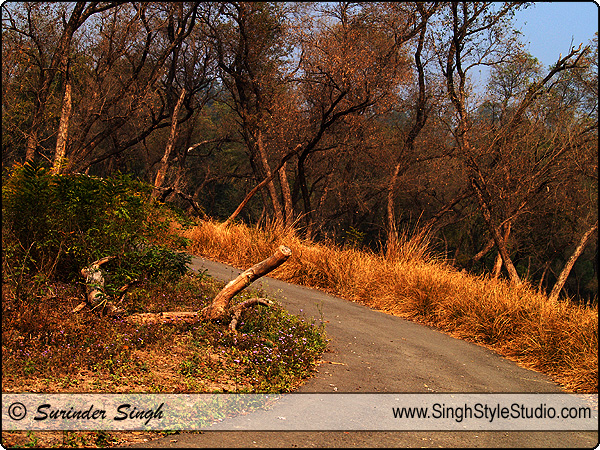 Landscape Photographer India Delhi