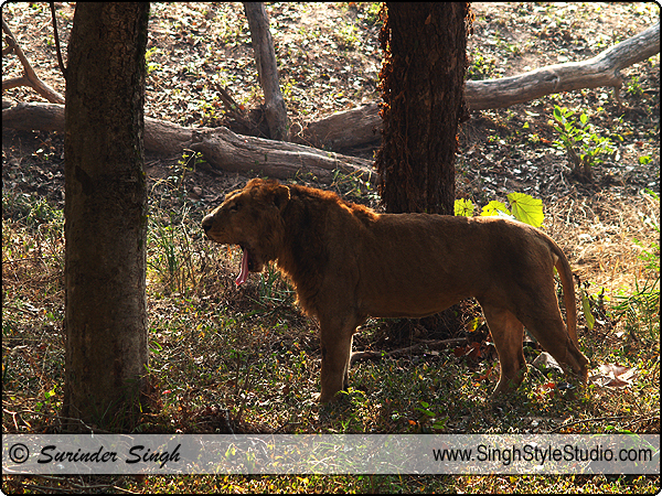 Wildlife Photographer in India Delhi Indian Wild Life Photography