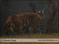 Wildlife Photography, India